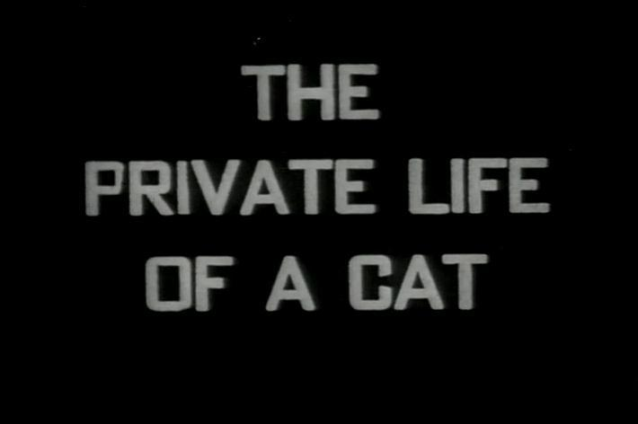theprivatelifeofacat194 Alexander Hammid & Maya Deren   The Private Life of a Cat (1944)